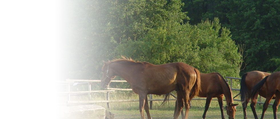 Thoroughbreds with Specialist Expertise
